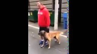 Вот как надо тренировать собаку )(, 2015-02-12T14:45:45.000Z)