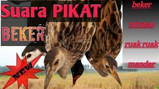 Gambar cover SUARA burung Beker Ampuh Buat Jaring Malam.