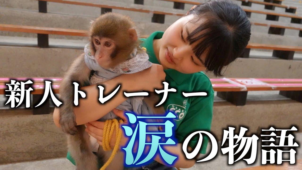 新米動物トレーナーがお猿さんと心を通わせられるようになるまで。