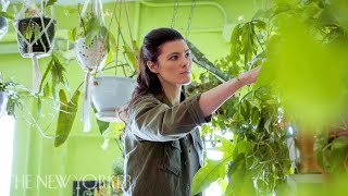 Why Millennials Love Their Houseplant Jungles | Annals Of Obsession | The New Yorker
