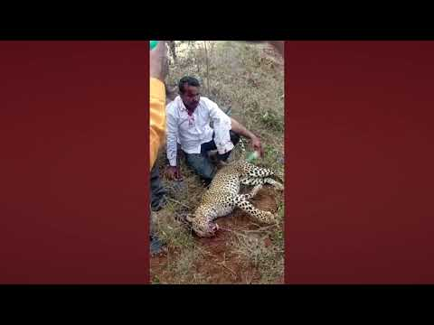 Person Fight with Leopard at Bendekere in Karnataka to Save Family | Pulihora News