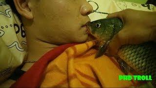 PHD | Trò Đùa Troll Hôn Cá Chép | Kiss The Fish