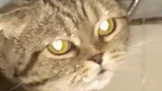 Мама мне не разрешает пить воду из под крана, а про кошку ничего не говорила (: