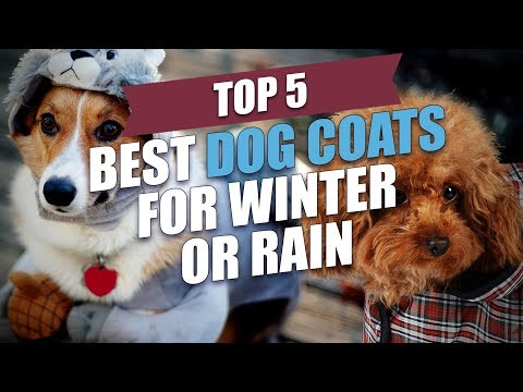 Top 5 Best Dog Coats for Winter or Rain