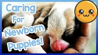 How to Care for Newborn Puppies! Tips and Advice on How to Care for a Newborn Puppy!
