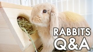 Rabbit Q&A | #vlogsgiving