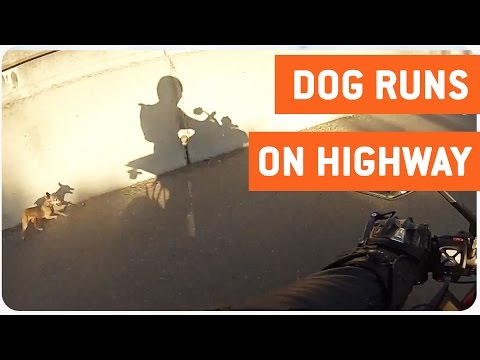 Dog Runs Through Traffic | Motorcycle Rescue Party