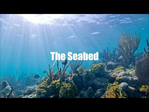 Fox Sailor - The Seabed