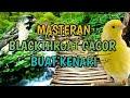 Masteran Blackthroat Buat Kenari  Mp3 - Mp4 Download