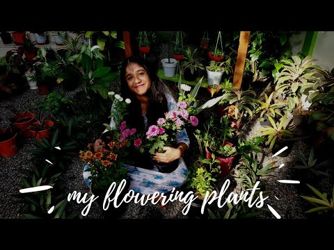 Flowering Plants In My Garden | My Flowering plant collection