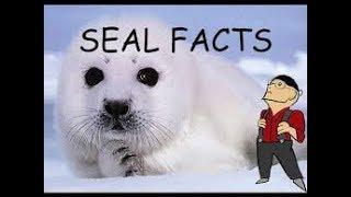 SEALS  Animals for children  Kids videos  Kindergarten