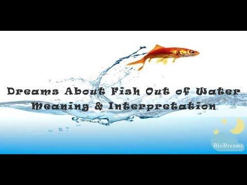 #55 Dreams About Fish Out Of Water - Meaning & Interpretation