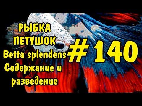 #140 РЫБКА ПЕТУШОК.