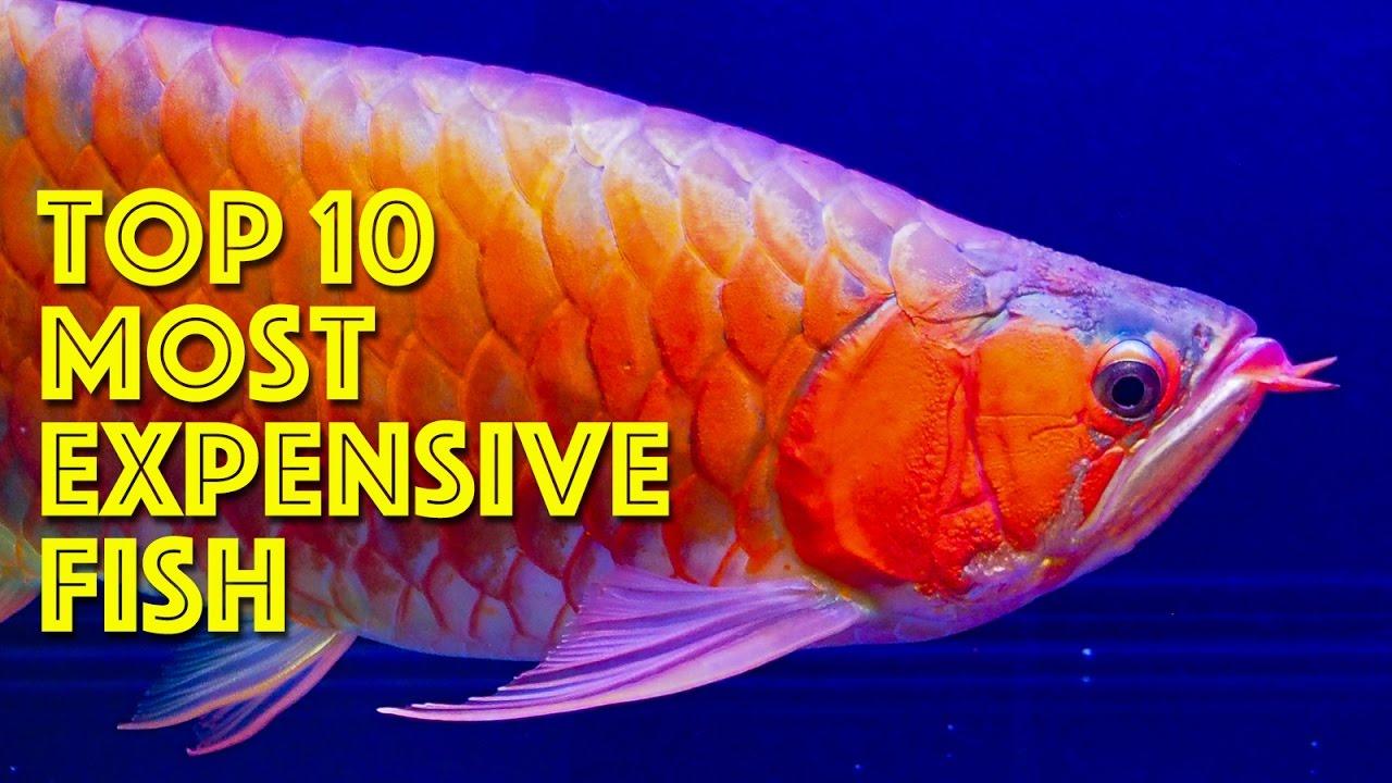 most expensive freshwater aquarium fish | Reviewwalls.co