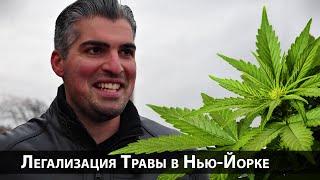Опрос #2: Легализация травы в Нью-Йорке, США