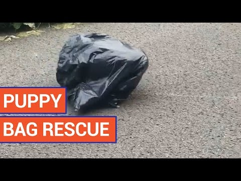 Amazing Puppy Pet Rescue Video 2016 | Daily Heart Beat