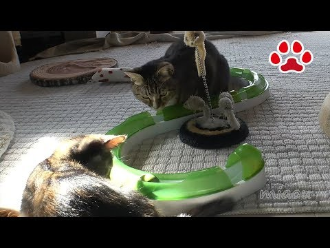 Mimi,won't you play with a kitten?[Cats room Miaou]-turn on English subtitle