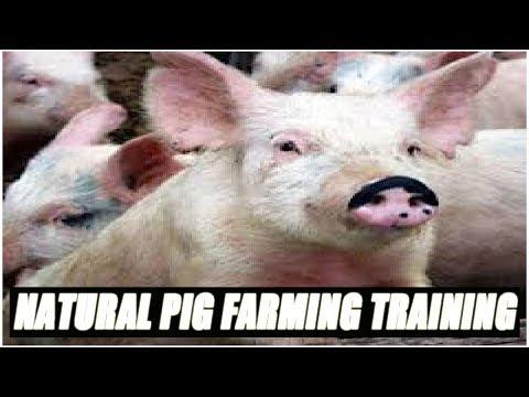 Natural Pig Farming Training