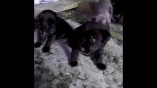 Мои любименькие собачки)))