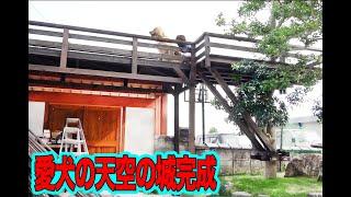 愛犬の気分はまさに石川五右衛門!