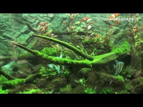 Aquarium ideas from InterZoo 2014 (pt.37) - JUWEL VISION, RIO and LIDO aquariums