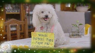 La Rosa de Guadalupe: Adriana vende pasteles para salvar a su perrita   Lucecita