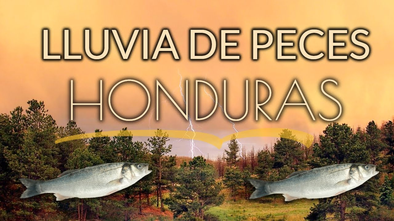 Download Lluvia de Peces en Yoro Honduras
