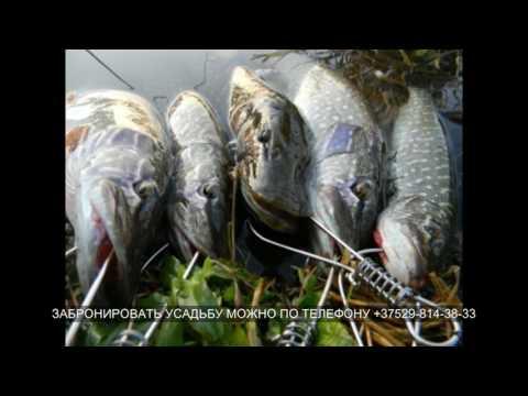 Усадьба добромысль на браславских озерах фото