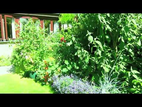 my summer garden   Large