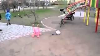 Кот защищает детей от собаки!
