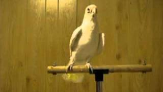 Bird Dances To Willow Smith