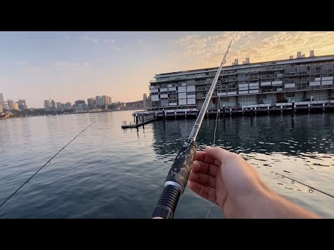 EP 2 - FISHING PIER 8 AT SYDNEY HABOUR - DAYTIME MULLOWAY!!