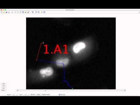 Manual Tracking & Segmentation Tool Tutorial