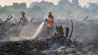 Лесные пожары в Индонезии: из-за смога закрывают школы