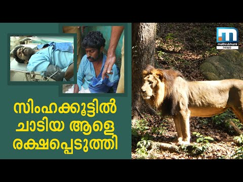 Man Jumps Into Lion's Enclosure In Thiruvananthapuram Zoo|Mathrubhuminews