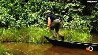 un homme aval vivant par un anaconda
