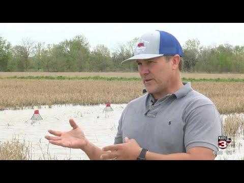 Weather Impacting Crawfish Sizes And Prices