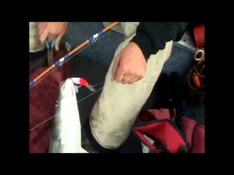 Trolling for stripers in montezuma slough youtube for Montezuma slough fishing report