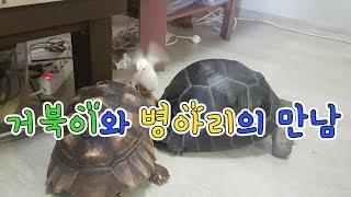 육지거북과 병아리의 만남Meeting tortoise …