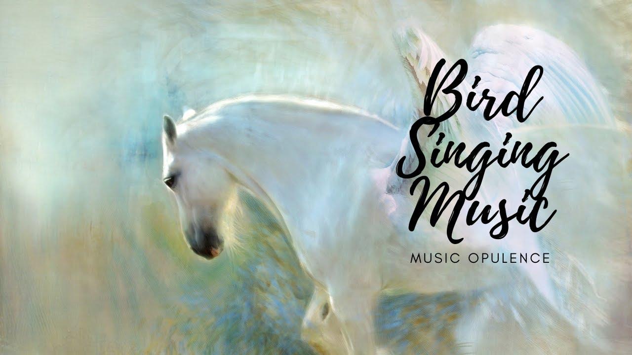 Bird Singing Music