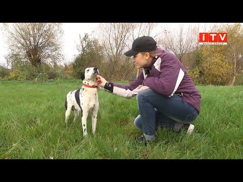 ITV media group: Штраф за скривджену тварину. Собаці, яку напередодні жорстоко побив чоловік шукають сім'ю