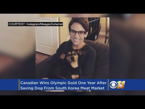 Olympic Skater Wins Gold After Rescuing Pup From South Korea Meat Trade