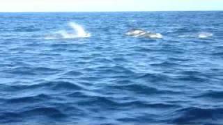 Catalina Island Whale Watching