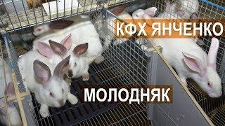 Содержание молодняка кроликов на ферме Сергея Янченко. Кабардино-Балкария.