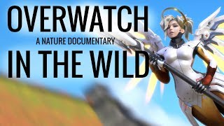 IF OVERWATCH WAS A NATURE DOCUMENTARY 2
