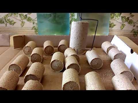 Как приготовить технопланктон для толстолобика в домашних условиях видео