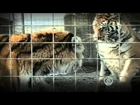 The CBS Evening News with Scott Pelley -