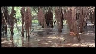 Fantasia chez les ploucs (extrait 2)