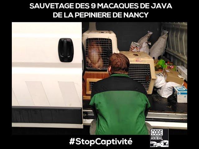 Mardi 22 décembre : Les macaques crabiers de la Pépinière quittent enfin Nancy !