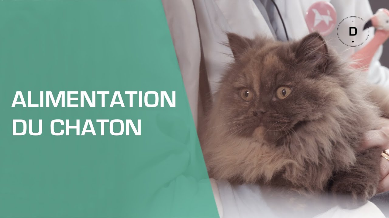 Comment nourrir un chaton animaux youtube - Comment rendre propre un chaton ...